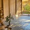 【京都紅葉2020🍁高山寺】鳥獣人物戯画絵巻と善財堂子像の山の中のお寺⛩