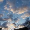 朝雀とツワブキの綿毛と荘厳な夕日