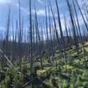 ニュースで見る山火事の映像にショックを受けていましたが、大自然の驚異の回復力にも同時に感嘆…
