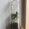 オリーブの挿し木 ペットボトル密閉挿し