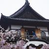 現存12天守の1つ、犬山城は桜の時期も美しく楽しめます