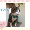 猫ちゃんのお写真紹介.第12弾