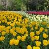 春は断捨離の季節!捨て活が進むほど心が整う不思議