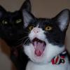 今日の黒猫モモ&白黒猫ナナの動画ー590