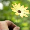 「世界に一つだけの花」とブッダの教え。幸福につながる力「The Art of Power」その12。