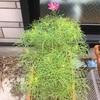 開花が進みました^ ^