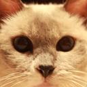 慢性腎不全お猫様を愛する会