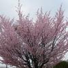 えぃじーちゃんのぶらり旅ブログ~コロナで巣ごもり 北海道もコロナで大変編 20210503