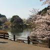 新宿御苑 中の池(東京都新宿)