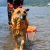 ウォーターワーク(水難救助犬)トレーニング