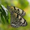 """蝶の乱舞する温室伊丹市昆虫館&サクソフォンリサイタル """"Fluidité"""": mélange et flou 流動性:混じり合うもの、ぼかし合うもの♪"""