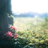 森に咲く花。
