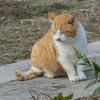 猫といっしょに畑の土を『アース』する。