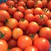 野菜の時間26 今年のプライベート畑は縮小版
