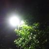 夜プール11