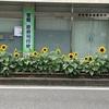 2019/08/18〜ひまわり〜