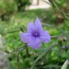 9月19日 花を撮ってきた。
