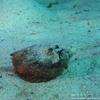 マブール島の写真(AWAS)