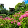 京都・西山 - 紫陽花咲く 初夏の善峯寺