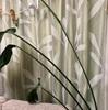 ワイルドな観葉植物②・カーテンにご当地「モケケ」