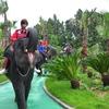 済州島(チェジュ島)体験旅行(2) #象に乗れる「ジャンボビレッジ」