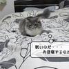 猫雑記 ~退屈と睡眠~