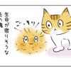 ブラッシングと豹変する猫