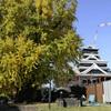 熊本城の大イチョウ