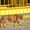 日本メモリアルパーク~コスモワールドにかけてかつていた猫 その3