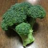 【家庭菜園】冬野菜の王様ブロッコリー