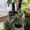 夏の観葉植物管理