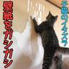 壁をガシガシする子猫!壁紙ボロボロにしよって‥泣【子猫のイタズラ】