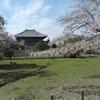 【奈良公園】東大寺の建物がデカい!大仏は?鹿と桜で穏やかな奈良公園を歩く