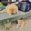 尾道でスナップその三 猫編