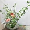 玄関の生け花が新しくなりました