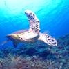 ♪オープンウォーターおめでとう、そして〆は慶良間ドリフトダイビング♪〜沖縄ダイビングライセンス慶良間〜
