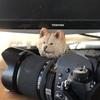 番宣はカメラマンの仕事じゃない。<174日目>