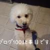 ~愛犬の肛門腺絞りの重要性について~