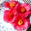 昨日集めた椿の花 4個の写真です