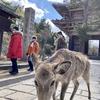 奈良シークレットツアー 2 東大寺