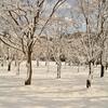 ついに来た〜っ!!雪…