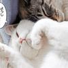 我が家の猫関係と猫に関する葛藤