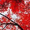 紅葉と愛機撮影