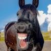 人生万事塞翁が馬