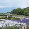 守山 花菖蒲園