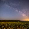 【天体撮影記 第25夜】 青森県 横浜町から菜の花と天の川