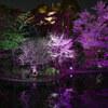 夜桜・ホテル椿山荘