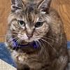 愛猫メロン、享年20歳という大往生