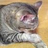 友だちから、お風呂の誘い。いい湯だな!!!今日はぐっすり眠れます。