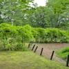 赤塚公園の藤~つくば市とその周辺の風景写真案内(402)